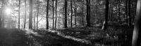 8317-morgenwald-grau