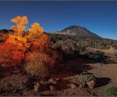 7101 Landscape of Mars