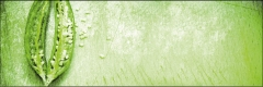 8402 Green Chili