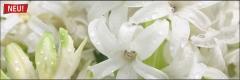 7315 Hyazinte weiß 1