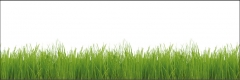 M12 Green grass